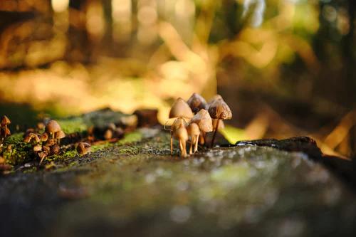 Mushrooms for creativity