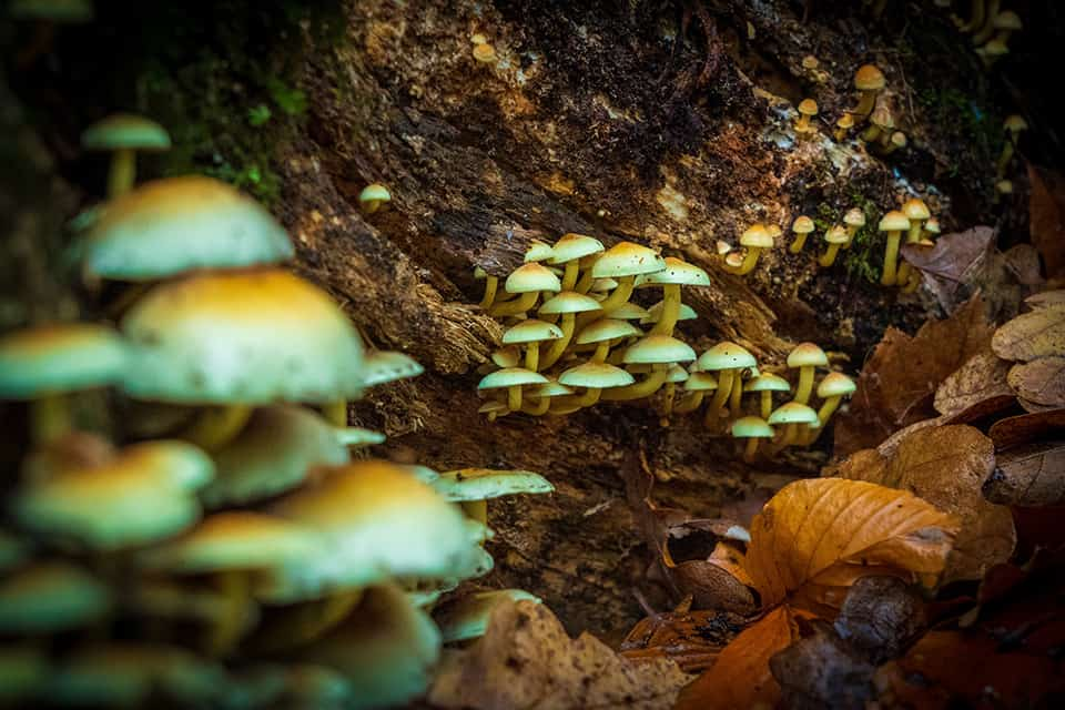 psychedelics muschrooms