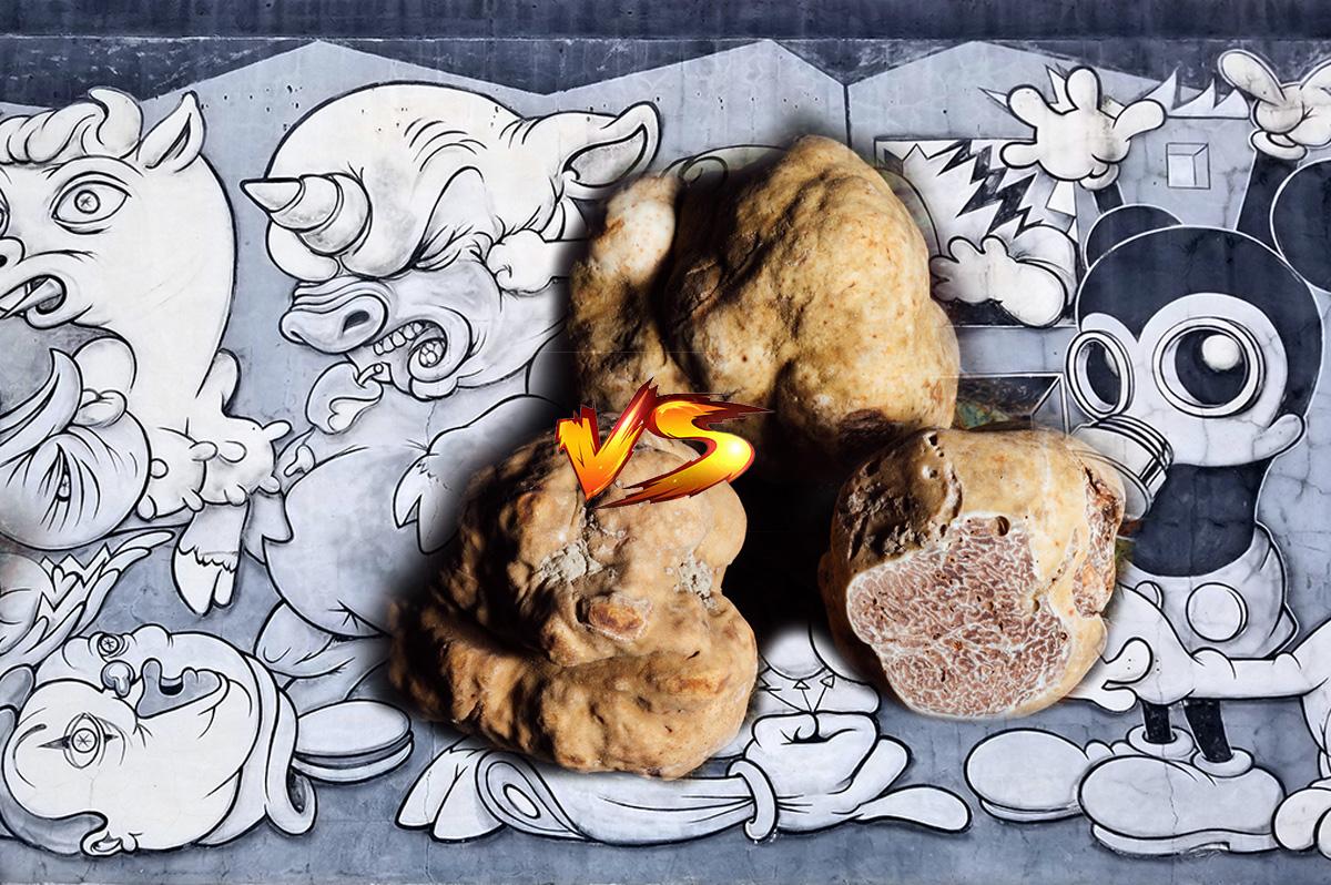 microdosing lsd vs truffles